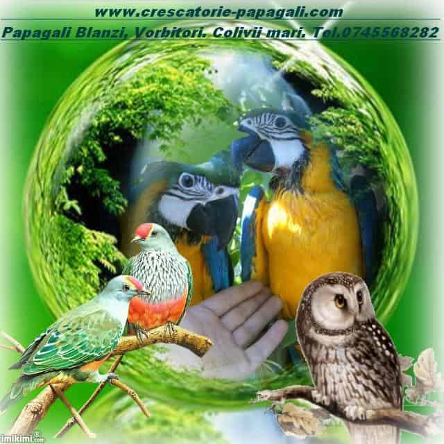 Papagali de vanzare. colivii de vanzare