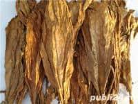 vand frunze de tutun virginia galben 60 80 cm diametrul frunzei la 35 ron pe kg