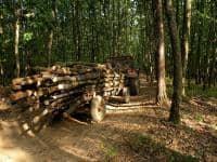 plecari urgente-domeniul forestier Germania