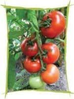 oferta-sere legume Germania