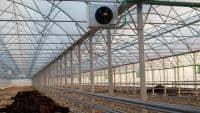 Caut asociat 2015 legumicultura sere-solarii