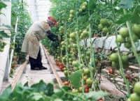 Agricultura strainatate
