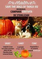 Campanie de sterilizari gratuite pentru caini si pisici