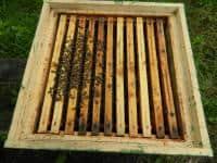 Vând 25 de familii de albine