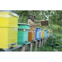 Vand 30 familii de albine