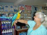 Albastru și aur feminin Macaw