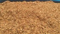 vand tutun de calitate superioara soiul virginia.