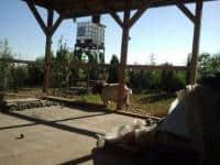 Vand tap de monta, rasa Boer (Africa de Sud), in varsta de 3 ani