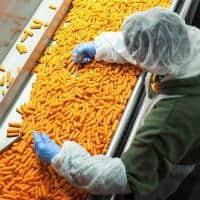 Germania depozit sortat si ambalat morcovi