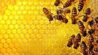 VAND la PRET AVANTAJOS : pavilion , stupi , rame , miere, produse apic