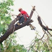 taiere arbori periculosi in zone aglomerate