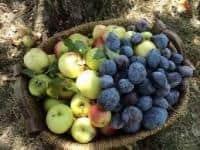 1.500 EURO la cules fructe in Germania