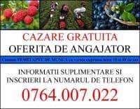 Oferta de munca in Spania 2018 (ZONA HUELVA) Fara comision!!!