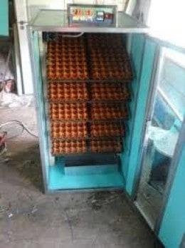 Incubatoare oua