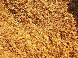 Vand tutun virginia tocat la 50 lei kg fara cotoare