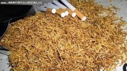 Vand tutun firicel adus din Ungaria 100/100  la pret de 120 ron kg