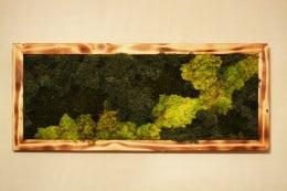 Tablou cu licheni 70x30