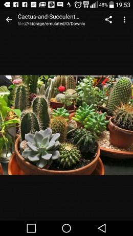 Vind cactusi si plante suculente