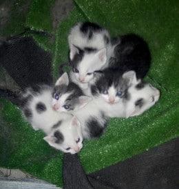 5 pisicuti moi si luciosi de 1 luna gratis