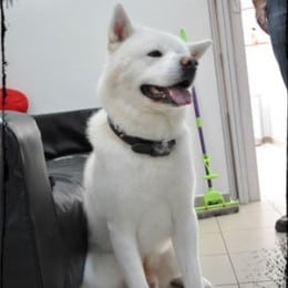 Salon frizerie canina Bucuresti sector 2