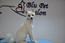 Frizerie canina, cosmetica si toaletaj, produse profesionale